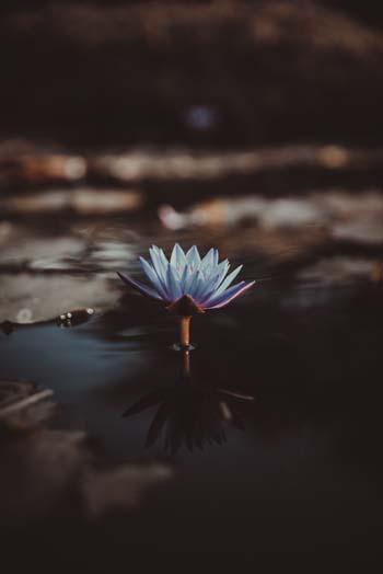 Karuna Reiki Lotus flower
